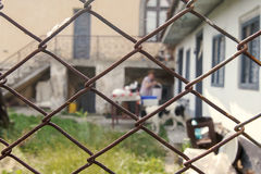 Agricoltore femminile visto attraverso un recinto Fotografie Stock