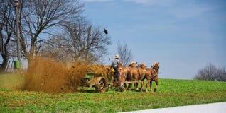 Agricoltore Fertilizing di Amish l'azienda agricola Fotografia Stock Libera da Diritti
