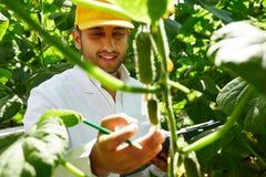 Agricoltore fiero alla serra Fotografie Stock