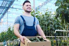 Agricoltore fiero con la scatola di cetrioli Fotografia Stock Libera da Diritti