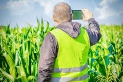 Agricoltore filmato con il PC della compressa sul campo di grano Fotografie Stock Libere da Diritti
