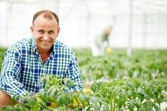 Agricoltore fra le piante Fotografie Stock
