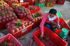 Agricoltore, frutta del drago, dragonfruit, commerciante Immagine Stock