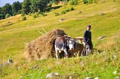 Agricoltore, Georgia Fotografia Stock