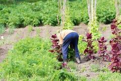Agricoltore in giardino Fotografie Stock Libere da Diritti