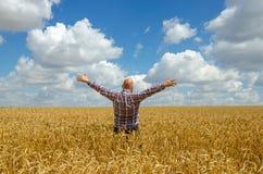Agricoltore glabro felice con la barba nel giacimento di grano maturo con handsup ad un cielo blu grande raccolto Immagini Stock Libere da Diritti