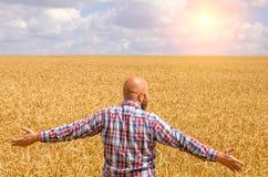 Agricoltore glabro felice con la barba nel giacimento di grano maturo con handsup ad un cielo blu grande raccolto Immagini Stock