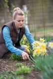 Agricoltore grazioso che lavora nel giardino con i fiori Piantagione di Fotografia Stock