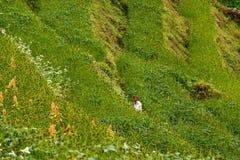 Agricoltore in Himalaya Immagini Stock