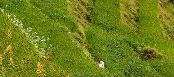 Agricoltore in Himalaya Fotografie Stock Libere da Diritti