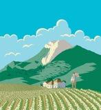 Agricoltore And His Field Fotografia Stock