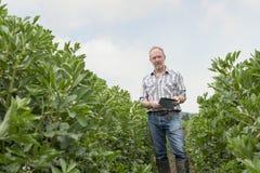 Agricoltore Holding Mobile Device nel mezzo dello spazio della copia della piantagione Immagini Stock Libere da Diritti