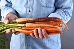 Agricoltore Holding Organic Carrots Fotografia Stock Libera da Diritti