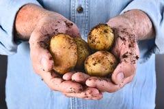 Agricoltore Holding Organic Potatoes Fotografia Stock