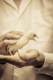 Agricoltore Holding un bambino Turchia Fotografie Stock