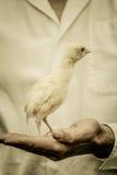 Agricoltore Holding un bambino Turchia Fotografie Stock Libere da Diritti