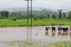 Agricoltore - India Fotografia Stock Libera da Diritti