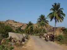 Agricoltore in India che retourning dai campi Fotografie Stock Libere da Diritti