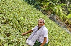 Agricoltore indiano Fotografie Stock Libere da Diritti