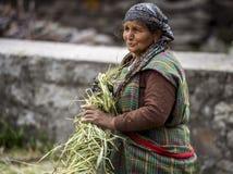 Agricoltore indiano anziano sul lavoro Fotografia Stock