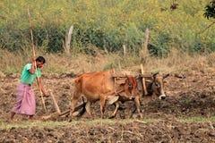 Agricoltore indiano che ara il suo campo Immagine Stock Libera da Diritti