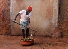 Agricoltore indiano che raccoglie sterco di mucca Fotografie Stock Libere da Diritti
