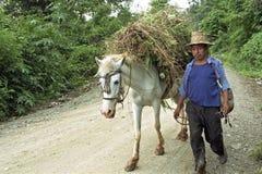 Agricoltore indiano con il cavallo caricato durante il lavoro Fotografie Stock Libere da Diritti