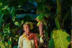Agricoltore indiano nell'azienda agricola della banana fotografie stock