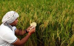 Agricoltore indiano o asiatico che conta soldi davanti all'azienda agricola verde fertile della risaia, concetto di fabbricazione Immagine Stock Libera da Diritti