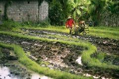 Agricoltore indonesiano che coltiva la sua azienda agricola Immagine Stock Libera da Diritti