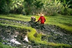 Agricoltore indonesiano che coltiva la sua azienda agricola Fotografia Stock