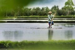 Agricoltore indonesiano che lavora in un terrazzo del riso Immagine Stock