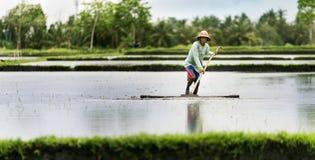 Agricoltore indonesiano che lavora in un terrazzo del riso Fotografie Stock Libere da Diritti