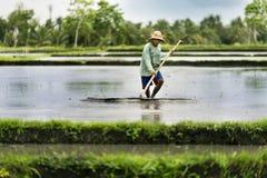 Agricoltore indonesiano che lavora in un terrazzo del riso Fotografie Stock