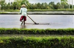 Agricoltore indonesiano che lavora in un terrazzo del riso Immagini Stock Libere da Diritti