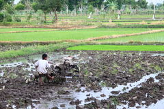 Agricoltore indonesiano del bambino Fotografie Stock