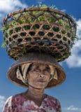 Agricoltore indonesiano di signora che porta le alghe raccolte lei capa dal mare alla sua casa per l'essiccamento, Nusa Penida, I Fotografie Stock