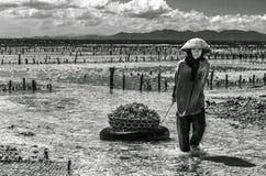 Agricoltore indonesiano di signora che porta le alghe raccolte in un canestro dal mare alla sua casa per l'essiccamento, Nusa Pen Fotografia Stock