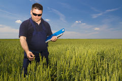 Agricoltore Inspecting Wheat Immagini Stock