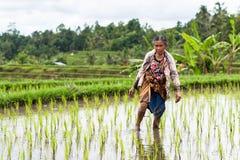 Agricoltore Jatiluwihwork Bali del riso Immagine Stock Libera da Diritti