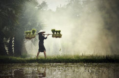 Agricoltore Lady Fotografia Stock Libera da Diritti