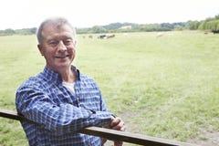 Agricoltore Leaning On Gate nel campo delle mucche Fotografia Stock Libera da Diritti
