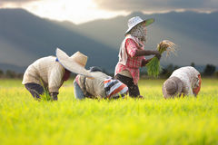 Agricoltore leggero grazioso Fotografia Stock Libera da Diritti