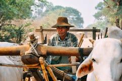 Agricoltore locale in Bagan Immagini Stock Libere da Diritti
