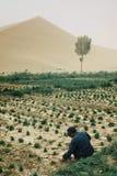 agricoltore locale che lavora ad un piccolo giardino al bordo del deserto della duna di sabbia fotografie stock