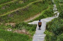 Agricoltore locale che porta un canestro lei indietro lungo un giacimento a terrazze del riso vicino al villaggio di Dazhai in Ci Immagini Stock