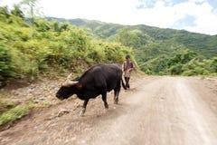 Agricoltore locale in Chin State, Myanmar Fotografia Stock Libera da Diritti