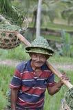 Agricoltore locale nel terrazzo del riso in Bali Asia Indonesia Fotografie Stock
