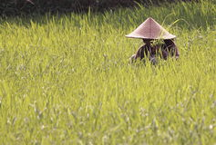 Agricoltore in Lombok Indonesia Fotografia Stock