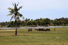 Agricoltore in Lombok Indonesia Fotografia Stock Libera da Diritti